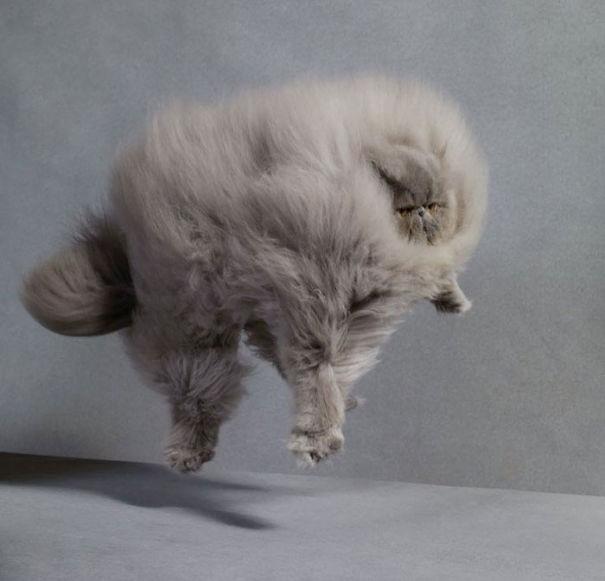 fluffycats133__605